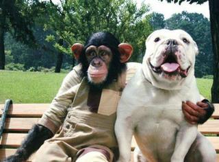 《狗狗猩猩大冒险》要复活了,主演是小庞的女儿和詹姆斯的曾孙