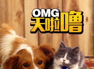 养猫和养狗有什么不同?你喜欢猫还是喜欢狗?