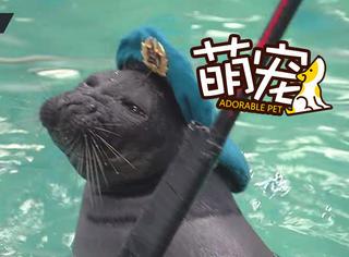 """这才是真正的""""海豹突击队"""""""