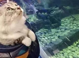 网友带主子逛街,经水族馆时,主子的表情瞬间就...