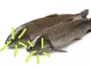 转发了那么多锦鲤,拜了那么多庙,最后还是输给了一条草鱼 | 周末考