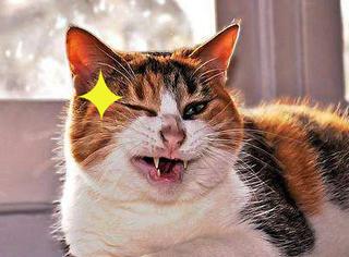 【GIF分享】猫主子为啥喜欢和铲屎官这样玩?捉摸不透呀~