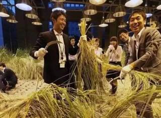 这家日本公司太牛了,在办公室里种地,工作累了就去收庄稼…