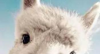 动物界冷知识大全,让你笑傲朋友圈!
