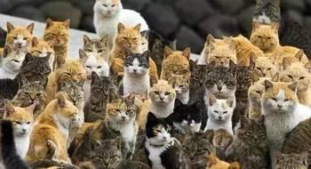 她将唐朝美女画成猫,萌化14万粉丝!原来被猫统治的世界是这样的……