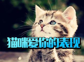 猫咪爱你时会对你做的事,偷看你也是爱你的表现哦