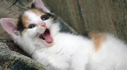 鸡界房价突然大涨,只因遇上猫...