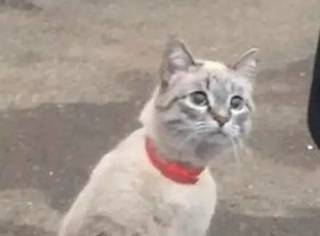 一出租车司机在路边遇到一只猫,猫竟然站了起来,这是要...