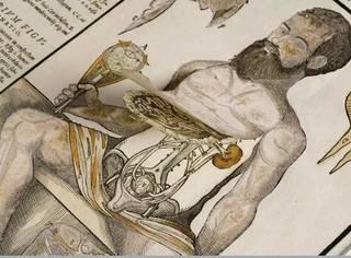 活页解剖图:还真是相当因吹丝挺