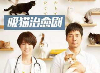 评分8.8!这部云养猫的治愈高分日剧,爱猫的你一定不要错过!