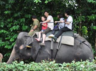 旅途 | 新加坡5大特色告诉你,为什么说全亚洲没有一个国家比它更适合暑期亲子游!
