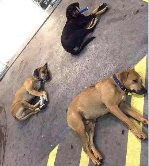 流浪狗被赶到公路边走投无路,幸好遇见一位暖心的加油站老板