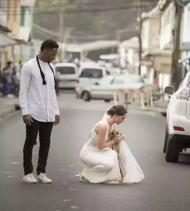 """拍婚纱照时偶遇一只流浪狗,结果这对新人做了个""""暖心""""的决定"""
