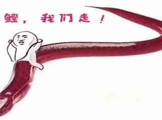 黄鳝门主播被行拘:在职场底线是用来保命的!