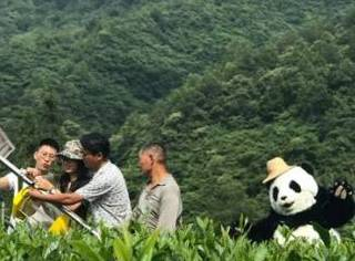 净肤·净水 | 科颜氏连续六年助力熊猫公益