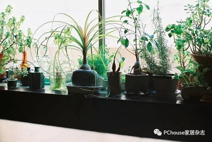 家中采光不够?新手也能养好的6种观叶植物