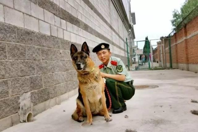 感 | 军犬飞龙退伍了,我最喜欢的战友你在哪里?