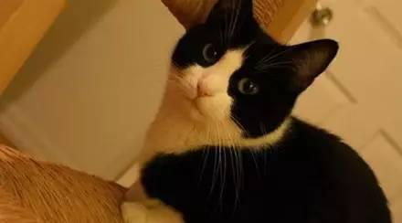 猫奴必看的14个关于猫的知识点...