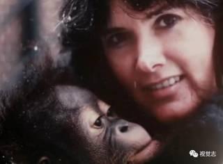 这只猩猩认了一位姑娘做妈妈,它学过手语、读过大学、相信过人类,后来,他死了