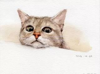 教会你用水彩画6只萌猫