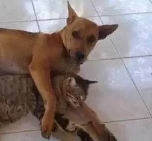 狗死后,猫咪变了,经常跑到狗的坟墓上发呆......