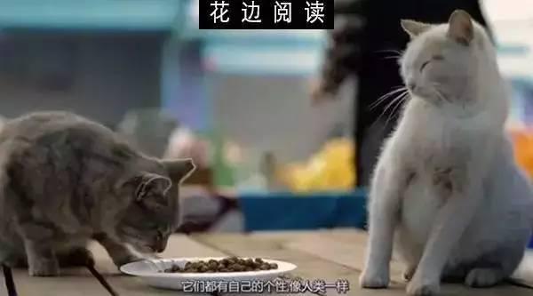 爱猫的人,也会好好爱人(高萌慎入)