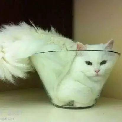 猫到底是固体还是液体?今年的搞笑诺贝尔奖又来让你笑着思考人生了!