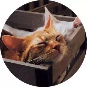 喝着咖啡撸着猫,应该是每个人的梦想吧!