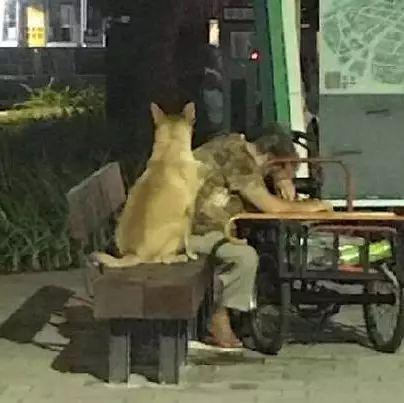 """奶奶走累了在路边休息,狗狗靠在一旁样子超紧张,""""阿婆你没事吧!"""""""