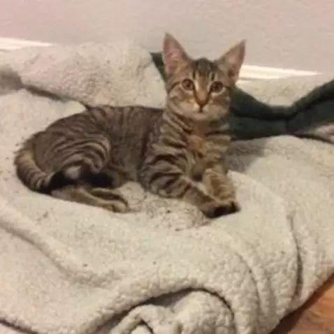网友一开门发现家里多了一只猫,原来是家里的金毛捡的……