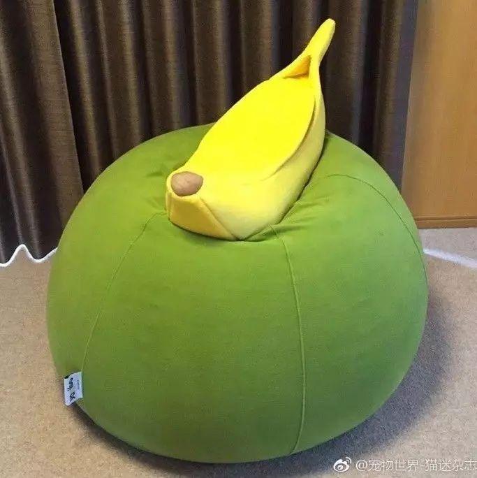 主人给家里的喵买了这个香蕉窝,当拨开香蕉皮的那一刹那萌爆...