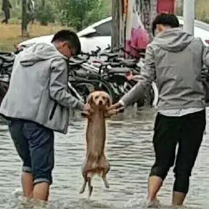 暴雨后大学里积水严重,一只流浪狗无助的站在水中,但接着暖心的一幕发生了……