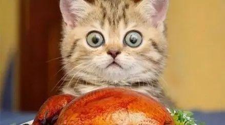 关于猫咪主子的脑洞合集,哈哈脑洞太大,笑得不能自理...
