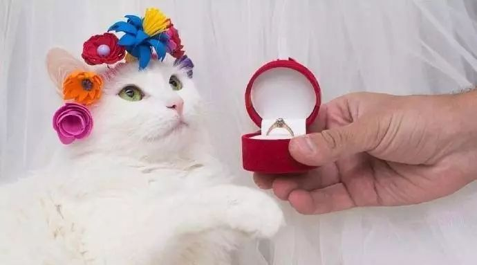 铲屎官血泪史:论合格的猫奴是如何养成的...