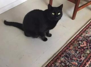 主人发现家里猫突然性情大变,带去看医生,没毛病,直到有天...