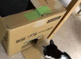 日本一位网友设计了一个暖脚的方法,但前提必须要有猫,而且...