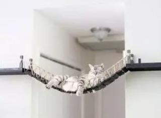 这位猫奴本来想买猫窝,但觉得市面上的猫窝都千篇一律,于是...
