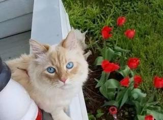 国外一主人发现自家猫可能是附近动物中的王,因为他发现...