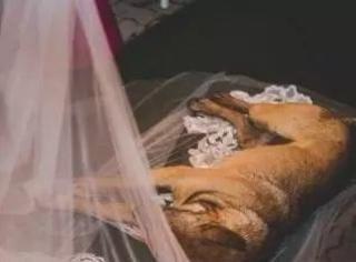 睡了我的婚纱,你以后就是我的狗了!
