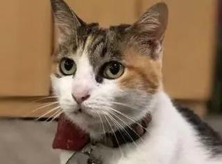 网友街头拍到一猫任人撸摸,当看到它脖子上的吊牌时,笑喷...