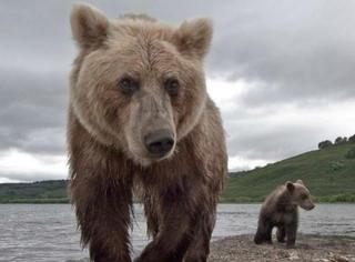 知足吧!你亲戚家的熊孩子和他们比都弱爆了